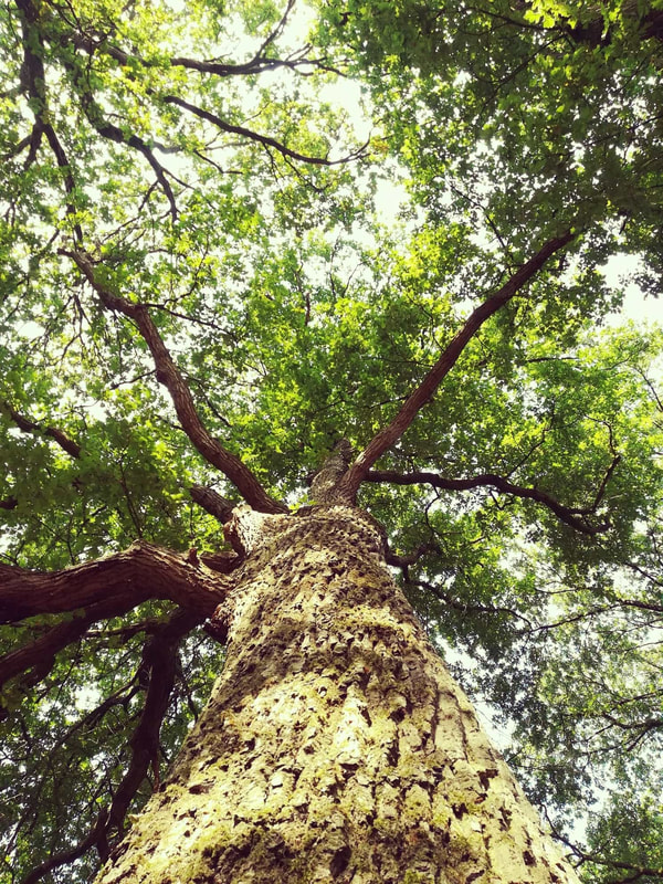 A healthy tree canopy